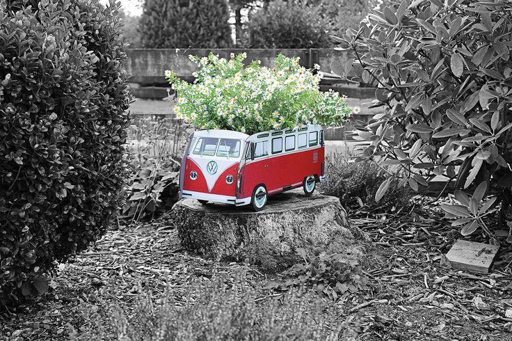 Blumenkasten VW T1 – groß Jetzt blüht Ihnen was bei Werkhaus! Wir möbeln Ihren Garten auf und bieten Kultautos zum Bepflanzen - wie den Volkswagen-Bulli. Er besteht aus witterungsbeständigem Holz und wird direkt und wasserfest bedruckt. Falls Sie ihren T1 doch lieber drinnen parken möchten: Es ist auch eine Schutzfolie zum Auffangen des Gießwassers enthalten. http://www.werkhaus.de/shop/product_info.php?info=p4265_blumenkasten-vw-t1---gross.html