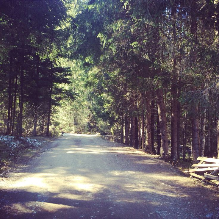#beautiful#romania#rachitele#road#forest#trees