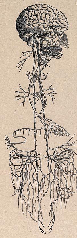 vagus-nerve-rebalancing-realining-brain