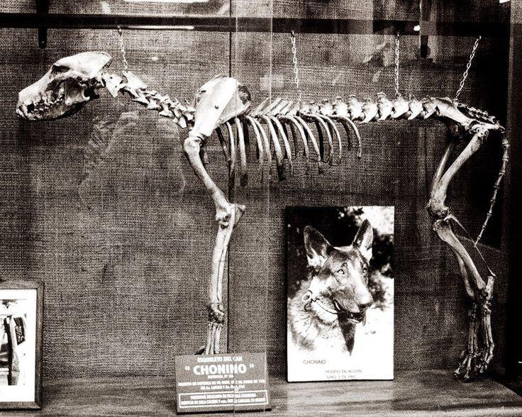 Dog Skeleton, Argentina, Gothic Photography