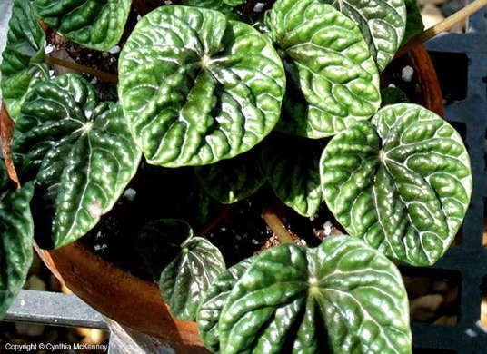 10 forgiving house plants · Low Light ... - 47 Best {gardening} Images On Pinterest