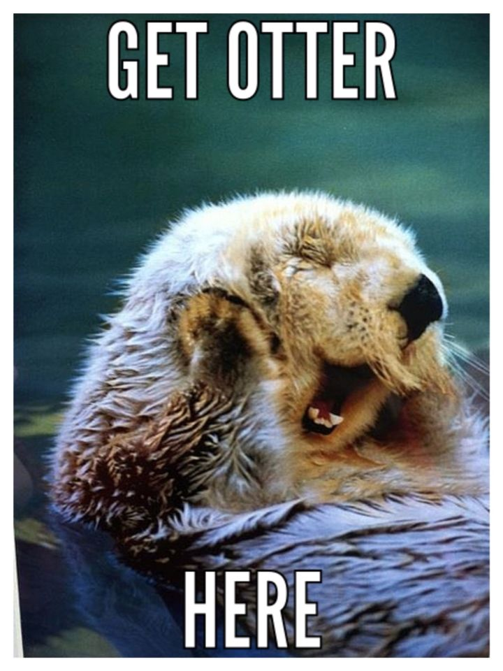 Good Day Sir Otter Meme