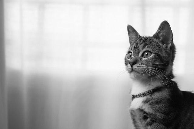 Coisas Que Você Precisar Saber Sobre O Microchip Em Animais Gata Linda Filhotes De Gatos Fatos Sobre Gatos