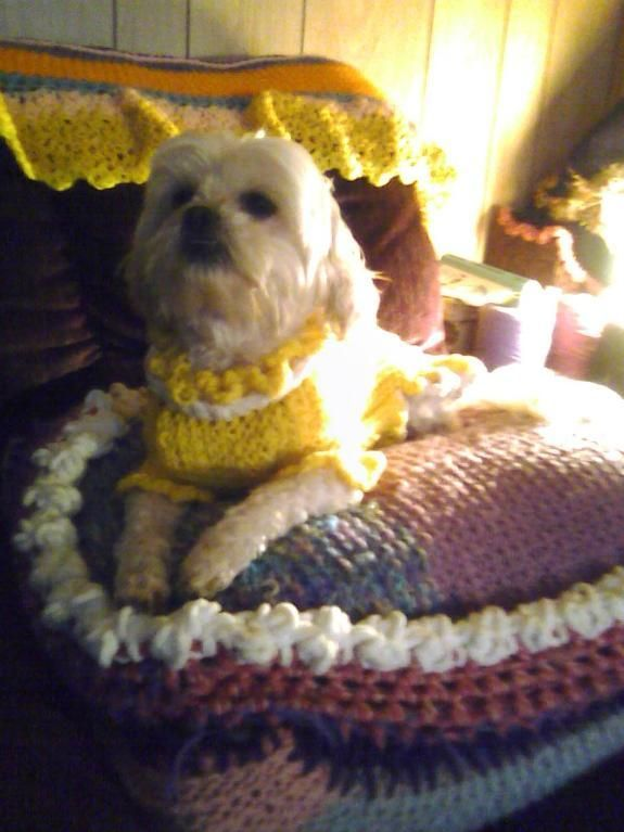 Puppy Sweater - probably the only pattern for a dog sweater that seems to fit the animal!  Well done.... clever lady Katya71!