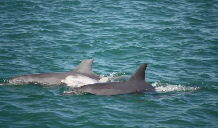 """Our favourite mother dolphin """"Nikki"""" with her new baby born in February 2011 we named """"Giggles"""""""