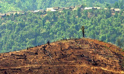 deforestation impact
