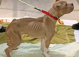 PLEASE SIGN Two dogs suffered and nearly died when they were allegedly abandoned without food or water. One of the dogs was reportedly so malnourished that his bones showed through his skin. Demand justice for these poor dogs.