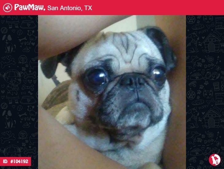Sparkles A Female Dog Lost In San Antonio Tx 78229 Pet Details