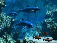 alive ocean waves sounds desktop background for pc  | 3D Desktop Themes, Free 3D Desktop Themes