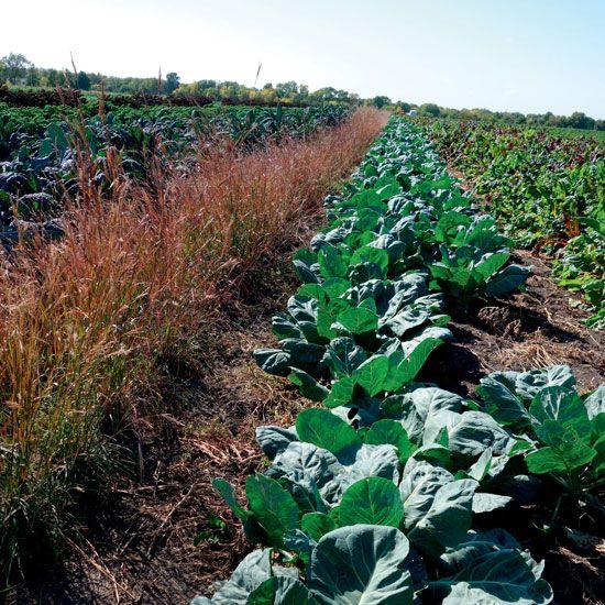 54 Best Org Garden Pest Control Images On Pinterest Organic Gardening Vegetables Garden And