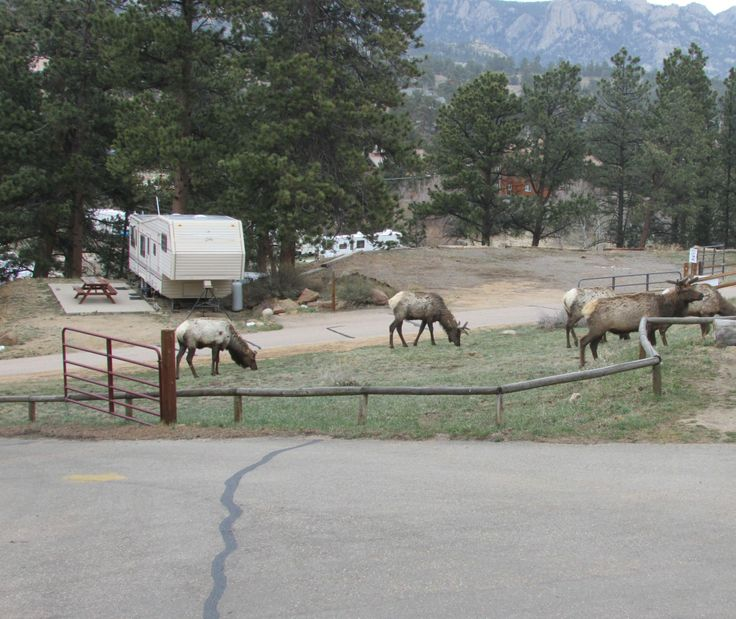 Campgrounds Estes Park Colorado: 1000+ Images About Manor RV Park-Estes Park, CO On Pinterest
