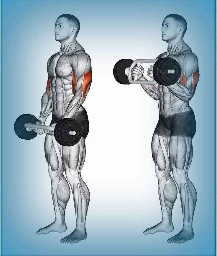 214 best Fitness/Bodybuilding images on Pinterest