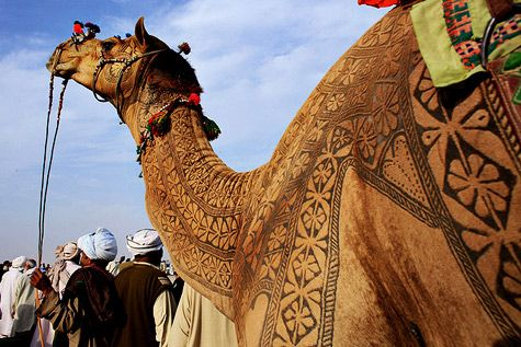 Moroccan Camel Art by osaprio