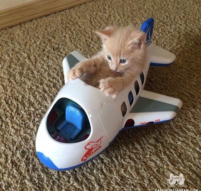 I am flying!!!!!