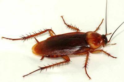 consejos para eliminar cucarachas 2
