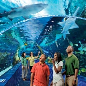 """Things to do in the Smoky Mountains: Ripley's Aquarium of the Smokies in Gatlinburg. Voted """"America's #1 Aquarium"""" by TripAdvisor and """"Top Destination to See Penguins"""" by USA Today Travel! #tnvacation"""