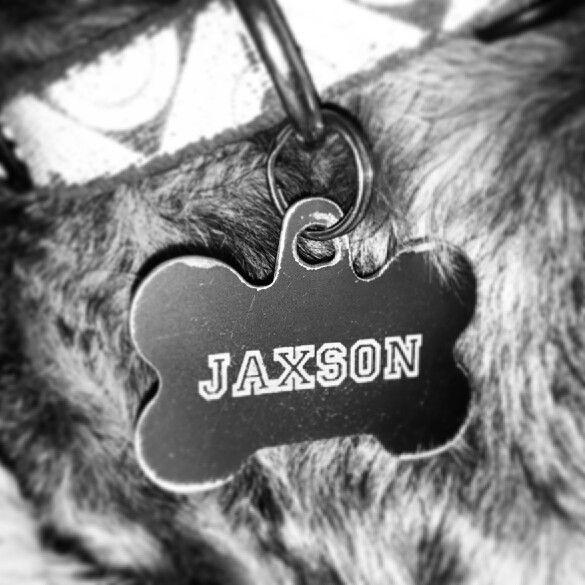 Jaxson Oliver Munn schnauzer  extraordinaire