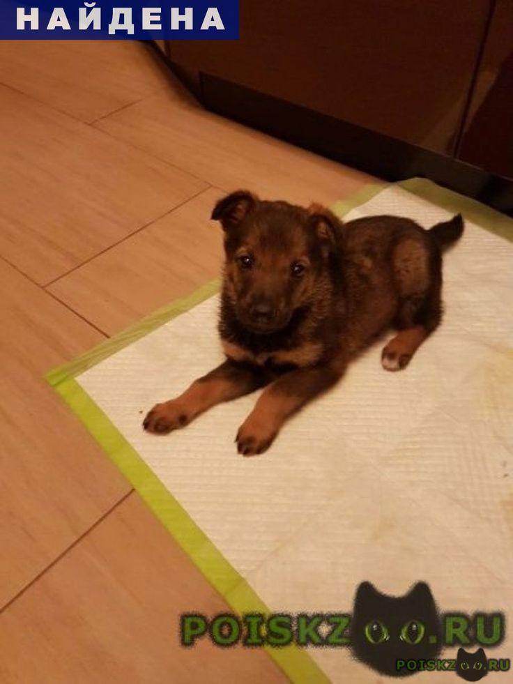 Найдена собака г.Щербинка http://poiskzoo.ru/board/read31752.html  POISKZOO.RU/31752 .. октября в городе Щербинка на улице Юбилейная найден щенок-девочка, дворняга, окрас под овчарку, спокойная, ест хорошо, видимых заболеваний не обнаружено. Отдам добрым людям, любящим животных.   РЕПОСТ! @POISKZOO2 #POISKZOO.RU #Найдена #собака #Найдена_собака #НайденаСобака #Щербинка