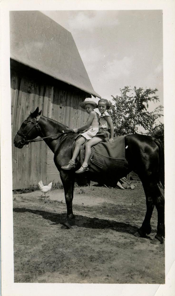 barnyard quartet ~~<>~~ (yesteryear, farm, countrylife, horse, chicken)