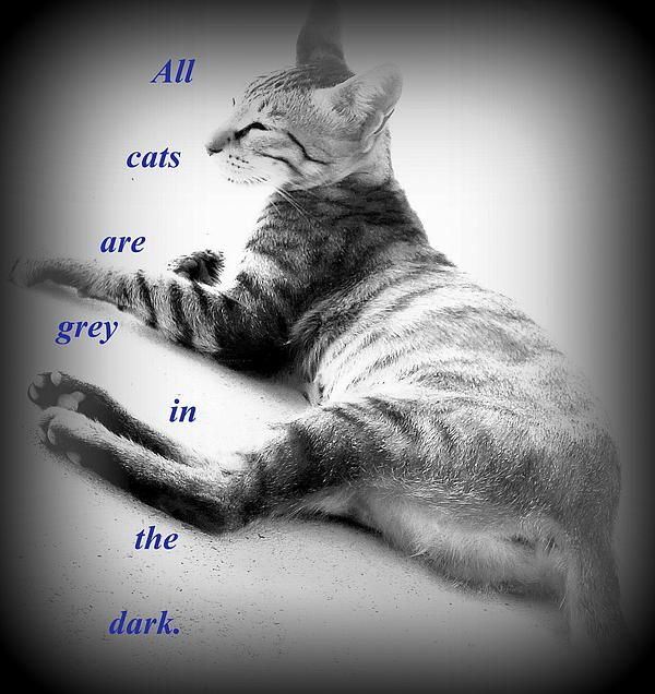 All Cats Are Grey