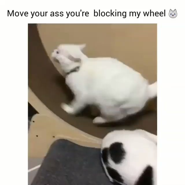 I can watch it all day - Tag a friend who must see this 😂 Double tap if you laughed 👍🏻 – Katzen
