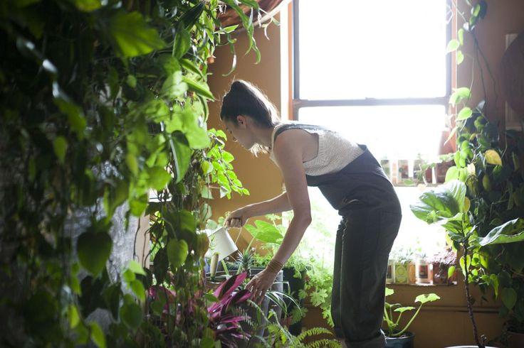 Cette femme a créé une véritable jungle dans son loft ! Elle possède plus de 500 plantes dans 100 m2...