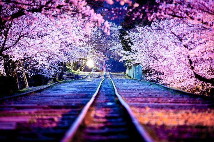 C'est le printemps, l'heure de la claque visuelle. Direction le Japon avec l'explosion des Sakura, ces fleurs de cerisiers qui..
