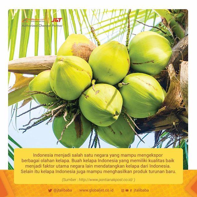"""DUA negara yang berpotensi menjadi tujuan ekspor produk kelapa Indoensia yaitu Thailand dan Tiongkok. """"Thailand dan Tiongkok menjadi negara yang paling berpotensi menerima ekspor produk kelapa dari Indonesia,"""" ungkap Direktur Pengembangan Pasar dan Informasi Ekspor, Tuti Prahastuti. Negara Thailand dikatakannya sedang membutuhkan diversifikasi produk kelapa impor dalam bentuk minyak kelapa. Permintaannya setiap tahun semakin meningkat. Selain itu negara ini juga tengah mengembangkan campuran…"""