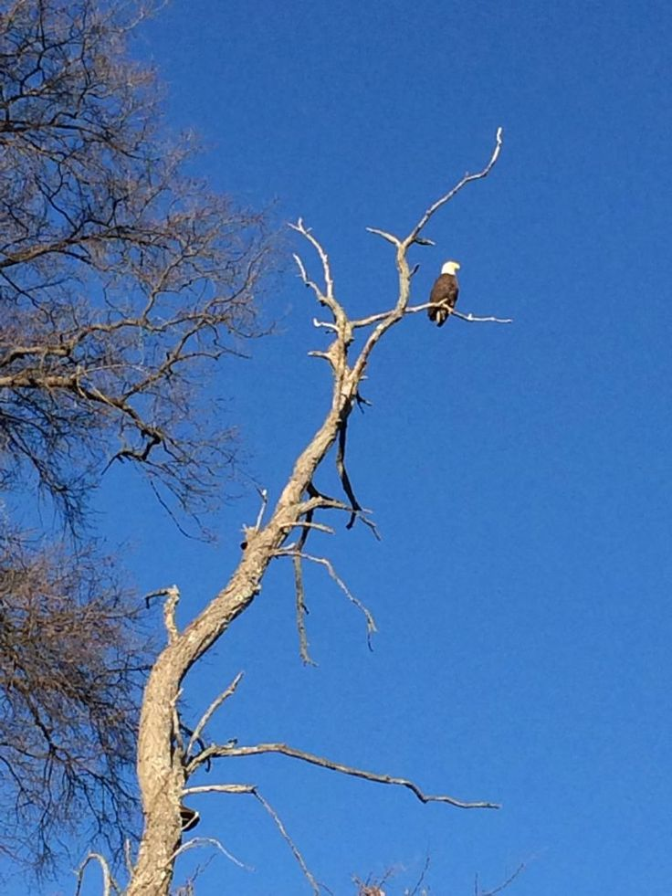 George Washington Birthplace on Northern Neck combines nature, history and beautiful views (including this bald eagle next to the Visitor Center)
