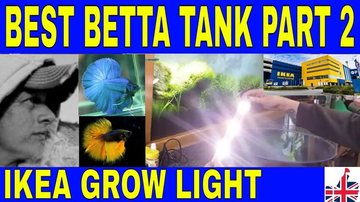 Best 25 betta tank ideas on pinterest betta fish tank for Best place to buy betta fish