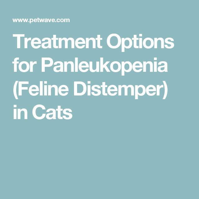 Treatment Options for Panleukopenia (Feline Distemper) in Cats