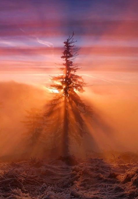 expression-venusia:  The Fabulous Sunrise Expression
