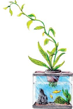 An introduction to small-scale home hydroponics by Ben Richards
