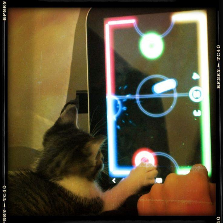 Nuestra Table K1 testeada por un lindo gatito.