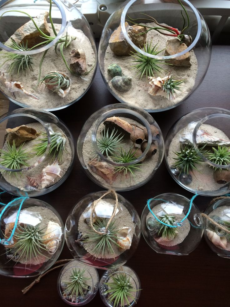 air plant sand terrariums by the planter pod'. facebook.com/theplanterpod