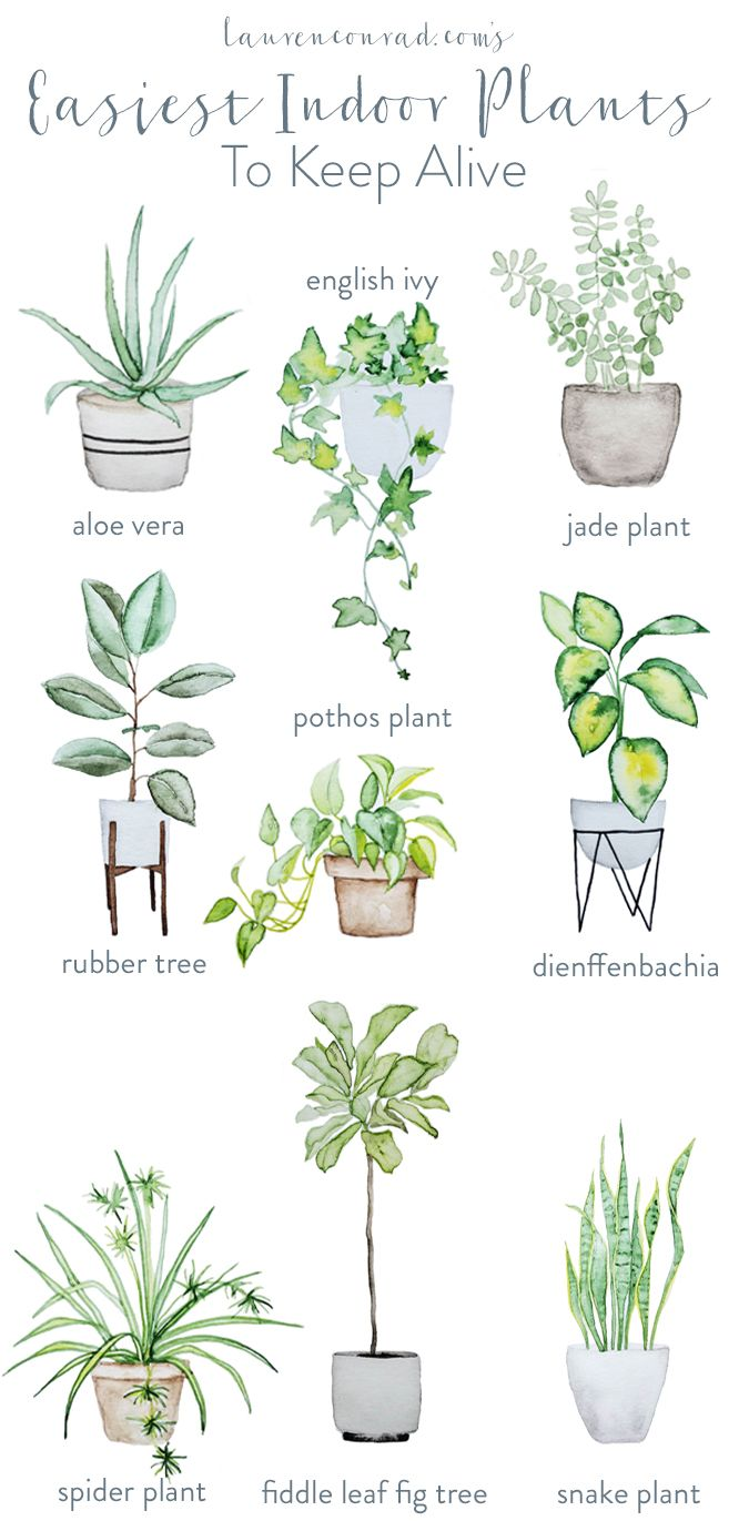 The easiest, and prettiest, house plants to keep alive.
