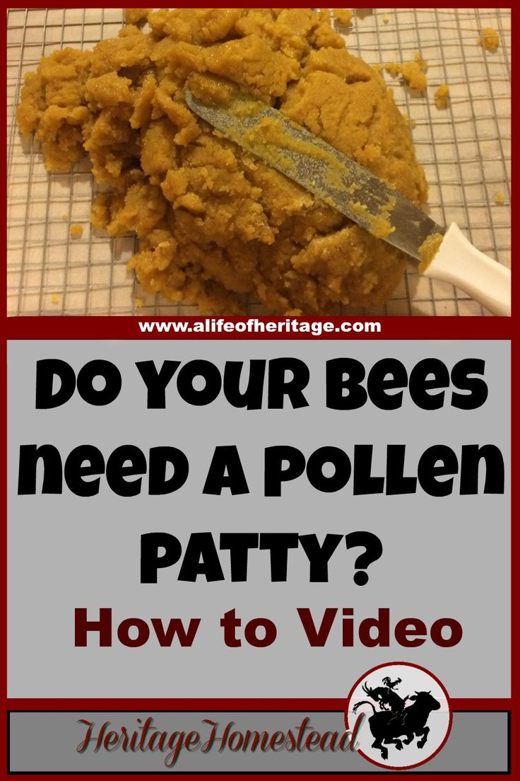 Bees | How to Bees | Bee Care | Pollen patties for bees | How to make pollen patties for bees | Watch this video to get an idea on how to make pollen patties. Pollen patties are a high protein substitute that supplies lipids, minerals, and vitamins