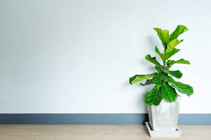 die 10 besten pflanzen f r drinnen pflanzen. Black Bedroom Furniture Sets. Home Design Ideas