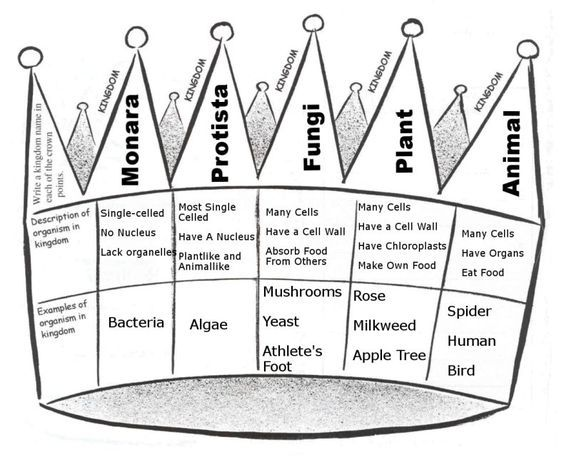 Kingdoms of Life Notes-Make into a pictorial input, but