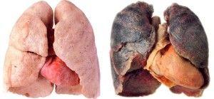 zioła oczyszczające płuca