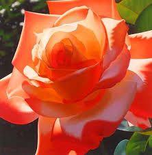 flores pintadas al oleo - Buscar con Google