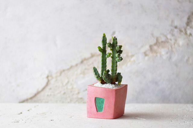 patina pot pink (square)現品