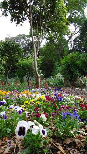Companys Garden in Cape Town, South Africa.