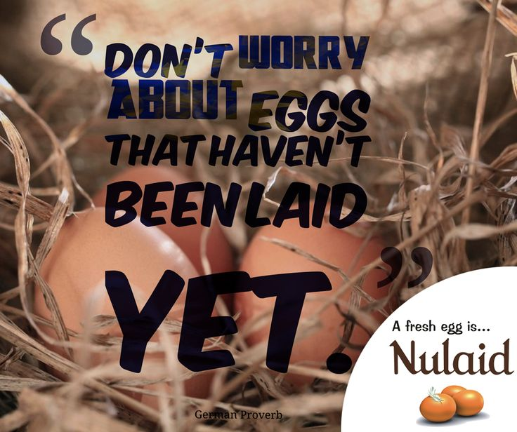"""""""Don't worry about eggs that haven't been laid yet."""" - German Probver #Nulaid #sundaymotivationals"""