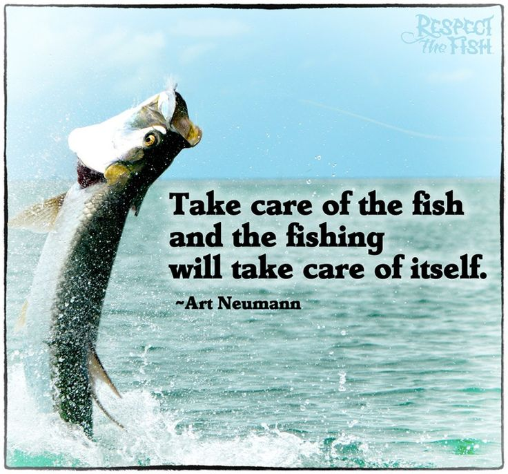 34 best fishing quotes sayings images on pinterest for Taking care of fish