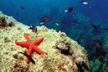Diving las Playas de Denia