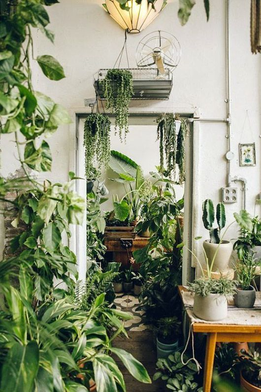 sumptuous design ideas green house plant identification. it s a jungle in here  446 best i n d o r g e images on Pinterest Container