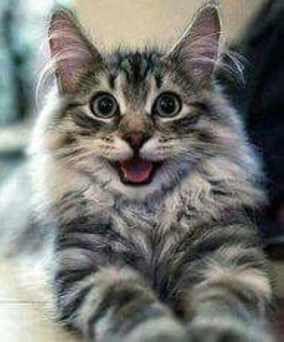 Happy catty…                                                                                                                                                                                 More