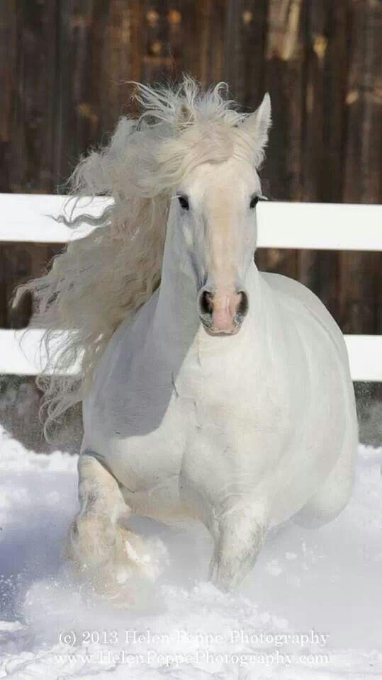 Horses: #Horse.