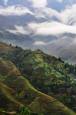 Dragon's Backbone Rice Terraces - China